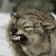 Apostasia lobo