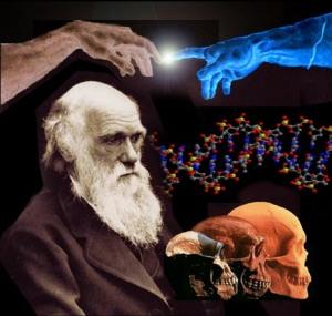 evolucion darwin