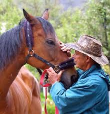 caballo,  bolivia