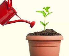 criar cristiano, crecimiento