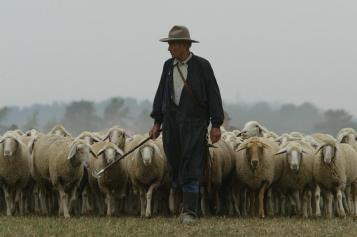pastor tarea