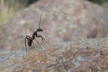 hormiga, insignificante