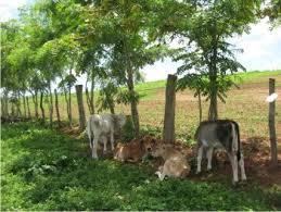 Potrero: lugar cercado para ganado