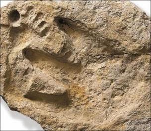 fosile 1