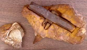 fosile 2