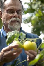 fruto examinar