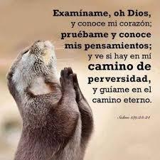 La Misericordia De Dios En Los Salmos Unidos Contra La Apostasía